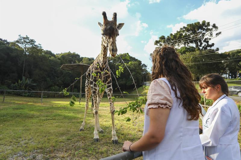 pandinha-a-girafa.jpg