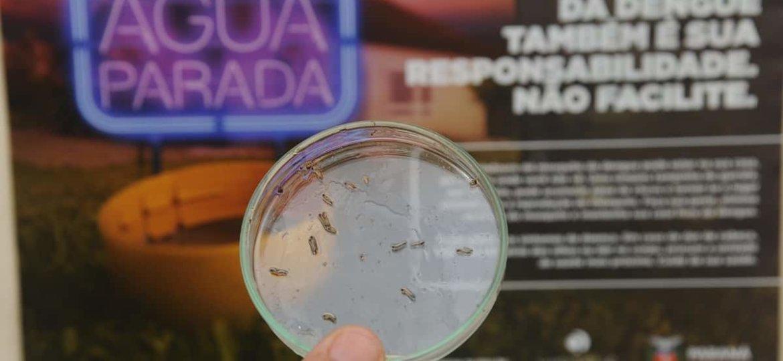 ANVISA-aprova-vacina-contra-a-Dengue_30112015002.jpg